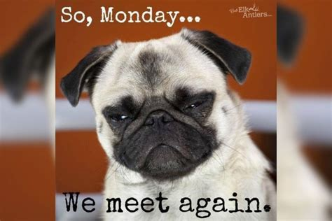 Monday Memes 20 Hysterical Memes Especially Created For Mondays Lifedaily