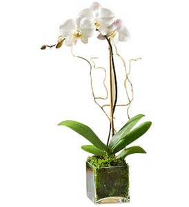 flower delivery houston white orchid plant scent and violet