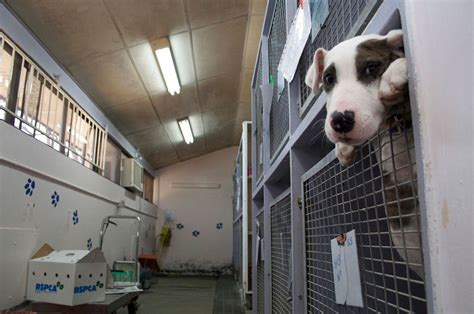 rspca shelter gympie   open   everyday