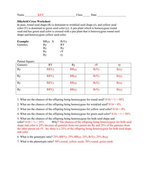 Worksheet Dihybrid Cross Worksheet Key Worksheet Fun Worksheet Study Site