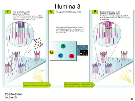 Next Sequencing Illumina Nanohub Org Resources Illinois Ece 416 Protein