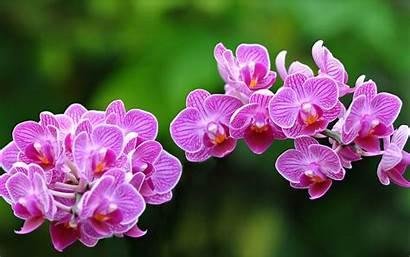 Flowers Orchid Nature Wallpapers Desktop Cut