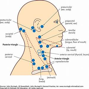 34 Lymph Nodes In Neck Location Diagram