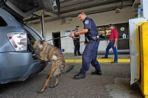 Detection Dogs: Learning to Pass the Sniff Test