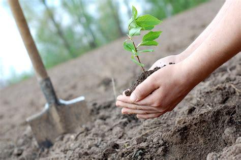 planting a tree satyanarayan das man from odisha who has planted trees in 15 states already bhubaneswar buzz