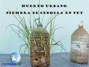Huerto urbano Siembra de cebolla en PET YouTube