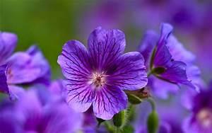 Purple Flowers Wallpaper HD 876 1920 x 1200 ...