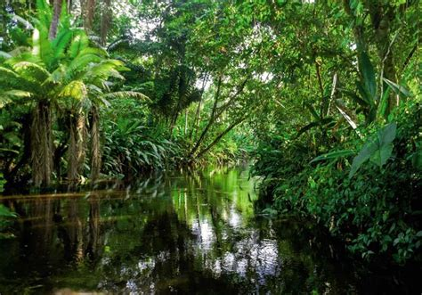 chambre vintage tableau foret tropicale photo grand format jungle exotique