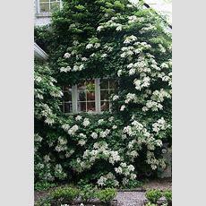 106042 Best Great Gardens & Ideas Images On Pinterest