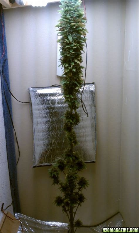 small chest freezer stealth grow box quotes