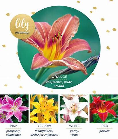 Lily Meaning Meanings Flower Symbolism Flowers Lilies