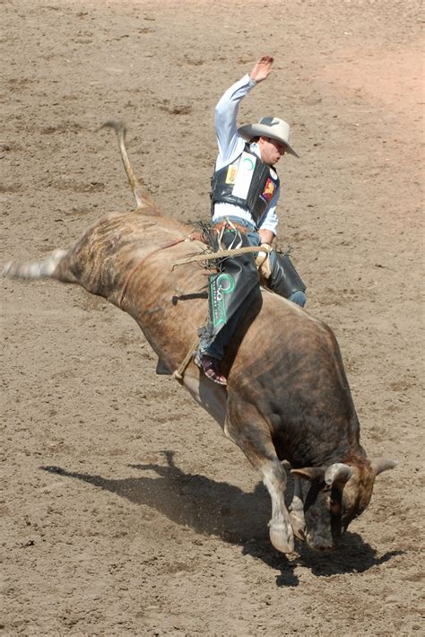 Bull Riding, the Ride of Your Life - WriteWork