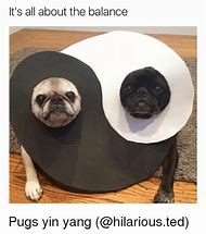 best pug memes ideas and images on bing find what you ll love