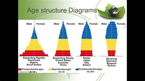population age structure and population pyramid