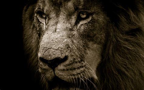 Download 3840x2400 Wallpaper Lion, Fur, Muzzle, Predator
