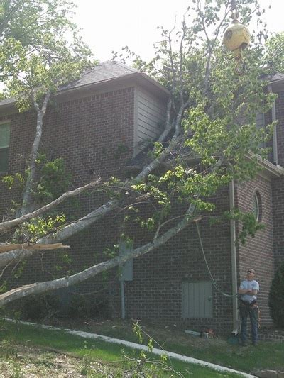 tree removal service  huntsville al  madison al
