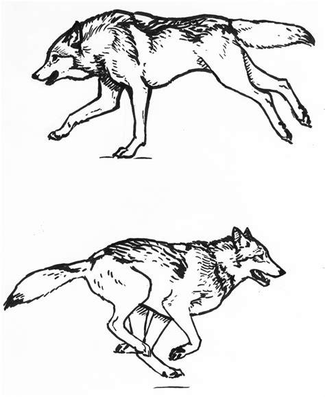 wolf running sketches  silvercrossfoxdeviantartcom