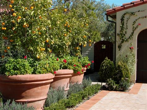 mediterranean plants and trees mediterranean plants and trees landscape mediterranean with potted plants citrus trees climbing