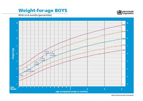 5 Best Images Of 4 Month Baby Weight Chart Pregnancy