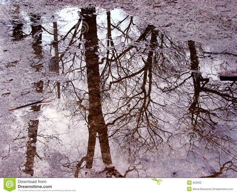 Tree Reflection In Puddle Stock Photo Image Of Dirt