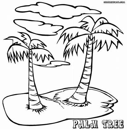 Palm Coloring Tree Trees Printable Adults Drawing