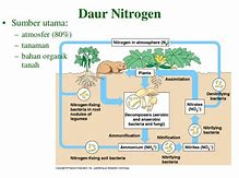 Hd wallpapers nitrogen cycle diagram hdibblove hd wallpapers nitrogen cycle diagram ccuart