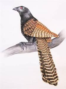 Simple Diagram Of Bird
