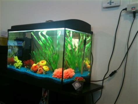 installation id 233 e d 233 co aquarium poisson