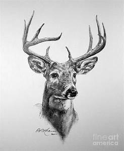 Buck Deer Drawing | Art stuff | Pinterest | Buck deer ...