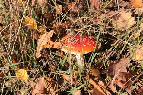 Entstehen Pilze Im Garten by Pilze Im Rasen Bestimmen Und Bek 228 Mpfen 10 Hutpilze