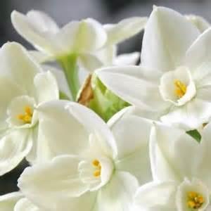 dig drop done amaryllis paperwhite bulbs mrt lawn garden