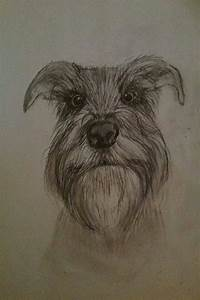 Pencil Drawings Love Awesome Schnauzer Sketch