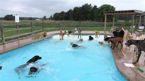 Swimming Pool Full Of Dogs