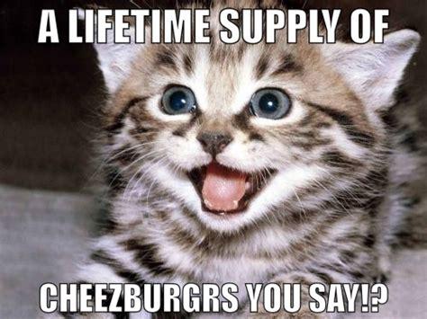 Cheezburger Cat Meme - cheezburger cat meme by asianplatypus6 on deviantart