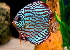 In photos: The 10 Most Beautiful Fish You Will See in the ...