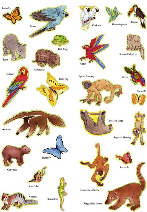 jungle animals preschool welcome to dover publications forest animals kit 132