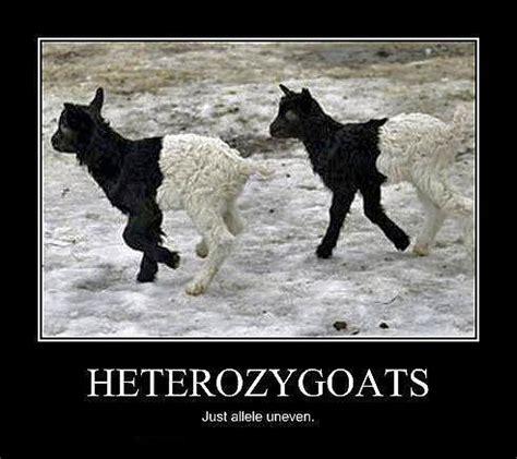 Meme Biology - biology meme tumblr