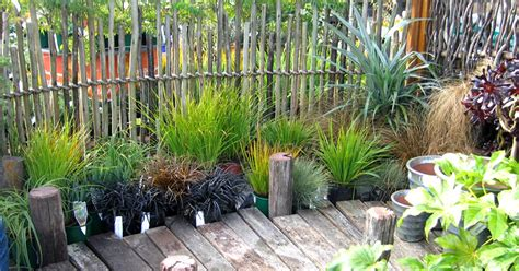 Affordable Eucalypt Fencing Auckland