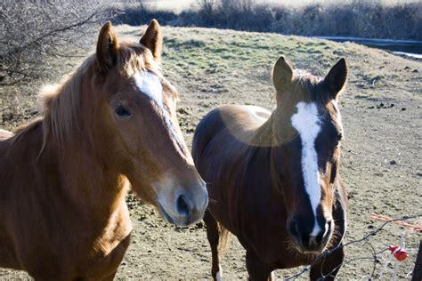 horse breeds barrel horses racing grade couple