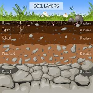 Soil Layers Diagram With Grass  Earth Texture  Stones
