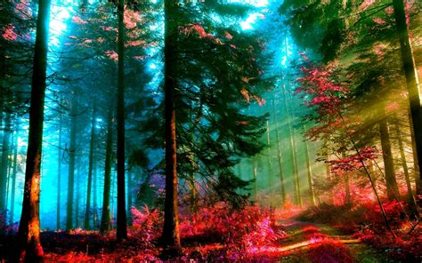 Background Wallpaper Images by Forest Wallpaper And Background Image 1280x800 Id