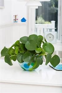 Bouture Plante Verte : la plante verte que je ne trouve dans aucune p pini re bruxelloise plantes pinterest ~ Melissatoandfro.com Idées de Décoration