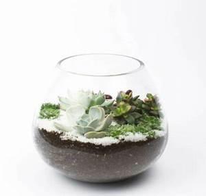 Minigarten Im Glas : pflanzen im glas selber machen ostseesuche com ~ Eleganceandgraceweddings.com Haus und Dekorationen