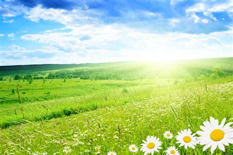 nature background hd 73 images