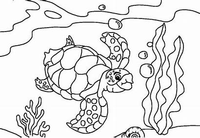 Coloring Sea Pages Turtle Diving Map Printable