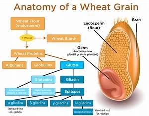 Are You Gluten Intolerant Or Wheat Sensitive