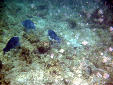 setelan fish blue rx aruba