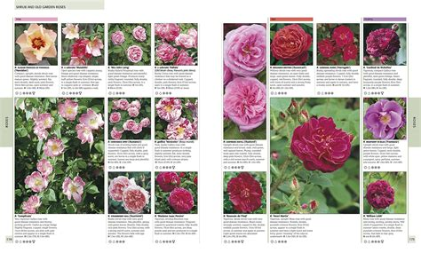 flower encyclopedia flower encyclopedia with pictures flower inspiration