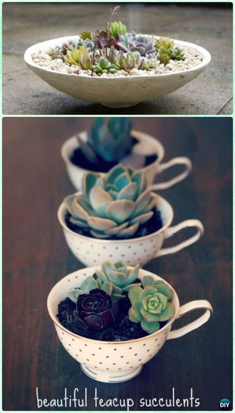 succulent garden diy indoor outdoor teacup succulents projects diyhowto instructions instruction plants gardening planting