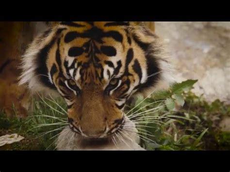 google  animals  selfies   la zoo youtube